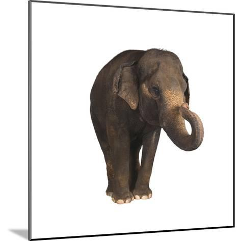 Indian Elephant-DLILLC-Mounted Photographic Print