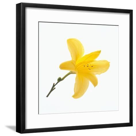 Lily Flower-DLILLC-Framed Art Print