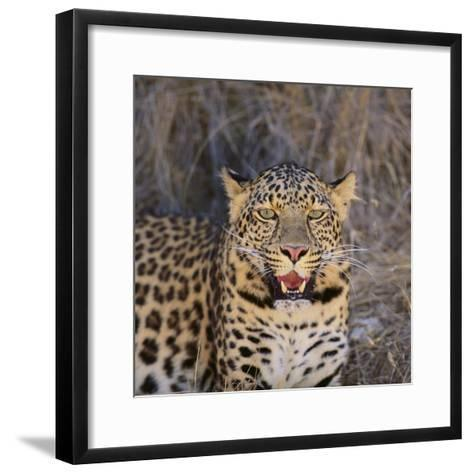 Leopard-DLILLC-Framed Art Print