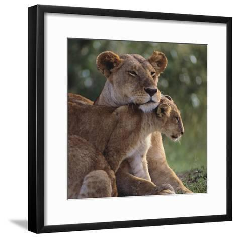 Lion Cub Nuzzling Mother-DLILLC-Framed Art Print