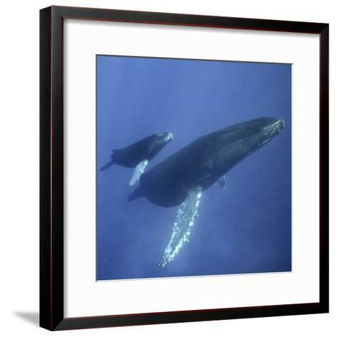 Humpback Mother and Calf-DLILLC-Framed Art Print