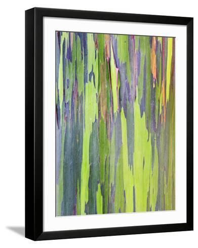 Rainbow Eucalyptus Trunk Near Hana, Maui, Hawaii, Usa-Rob Tilley-Framed Art Print