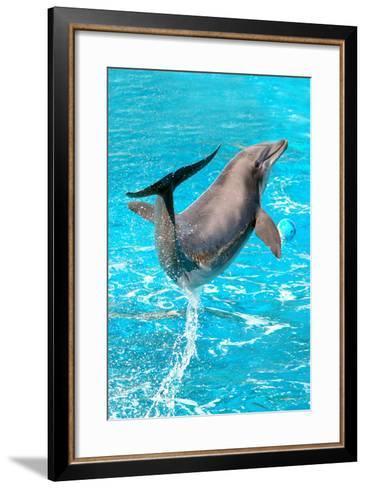 Dolphin Plays In Pool-Michal Bednarek-Framed Art Print