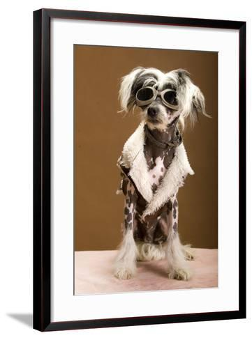 Sexy Chinese Crested Hairless Sporting A Cool Coat And Glasses- Candicecunningham-Framed Art Print