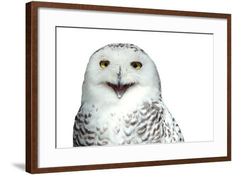Snowy Owl (Bubo Scandiacus) Smiling And Laughing Isolated On White-l i g h t p o e t-Framed Art Print