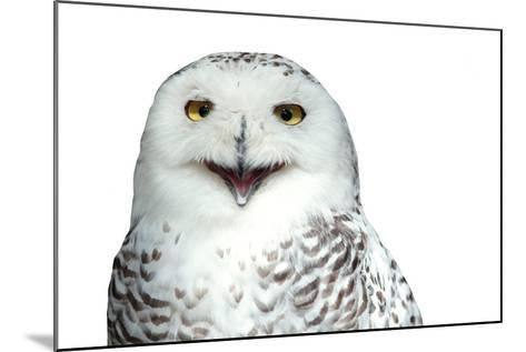 Snowy Owl (Bubo Scandiacus) Smiling And Laughing Isolated On White-l i g h t p o e t-Mounted Photographic Print