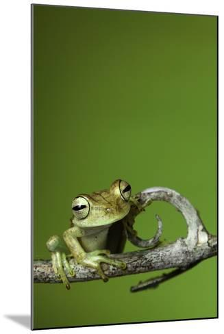 Tree Frog Golden Color Rainforest Amphibian On Branch Background Copy Space-kikkerdirk-Mounted Photographic Print