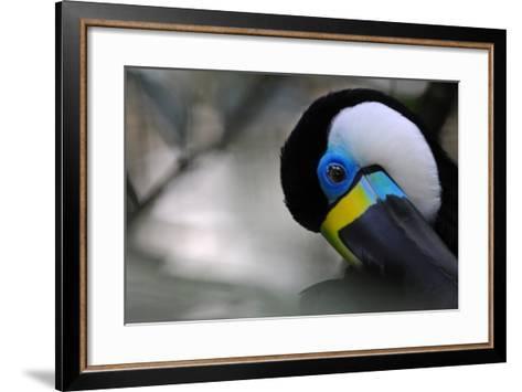 Beautiful Tucan Is Nodding- kertis-Framed Art Print