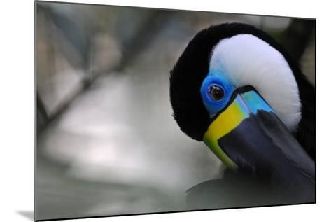 Beautiful Tucan Is Nodding- kertis-Mounted Photographic Print