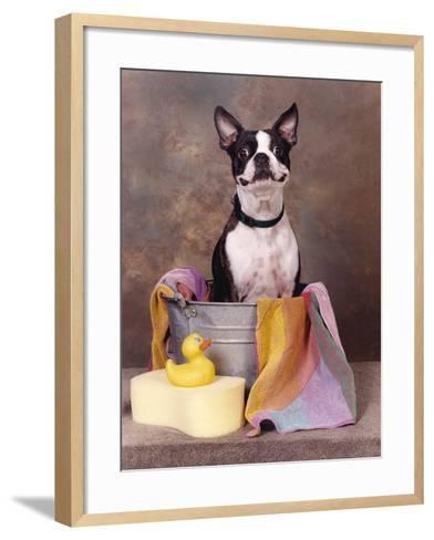 Boston Terrier In A Tub-Blueiris-Framed Art Print