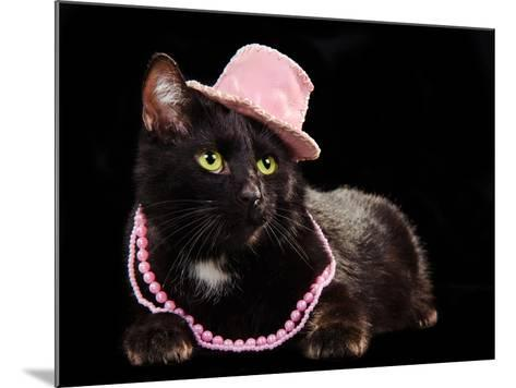Glamorous Black Cat Wearing Pink Hat And Beads Against Black Background-vitalytitov-Mounted Photographic Print