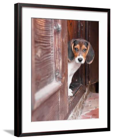 Portrait Of A Cute Beagle Puppy Sitting On Doorstep-jaycriss-Framed Art Print