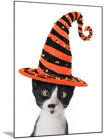 Cross Eyed Kitten Wearing A Halloween Witch Hat-Hannamariah-Mounted Photographic Print