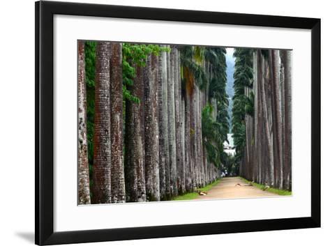 The Palm Alley In The Botanical Garden In Rio De Janeiro-xura-Framed Art Print