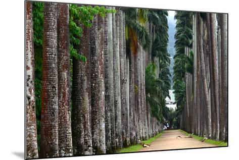The Palm Alley In The Botanical Garden In Rio De Janeiro-xura-Mounted Photographic Print