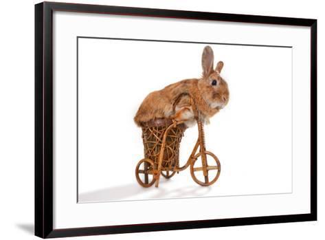 Photo Of Cute Brown Rabbit Riding Bike Isolated On White-PH.OK-Framed Art Print