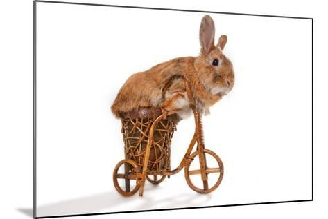 Photo Of Cute Brown Rabbit Riding Bike Isolated On White-PH.OK-Mounted Photographic Print