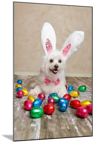 Easter Bunny Dog With Chocolate Easter Eggs-lovleah-Mounted Photographic Print
