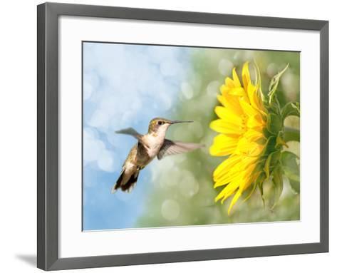 Dreamy Image Of A Hummingbird Next To A Sunflower-Sari ONeal-Framed Art Print