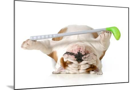 Retired Dog - English Bulldog Laying Down Holding Golf Club-Willee Cole-Mounted Photographic Print