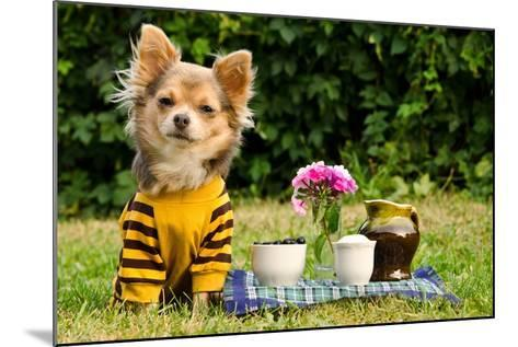 Cute Chihuahua Dog At The Picnic In Summer Garden-vitalytitov-Mounted Photographic Print