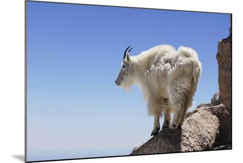 Mountain Goat On A High Mountain Ledge-Blueiris-Mounted Photographic Print