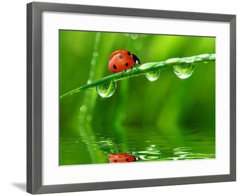 Fresh Morning Dew And Ladybird-volrab vaclav-Framed Art Print