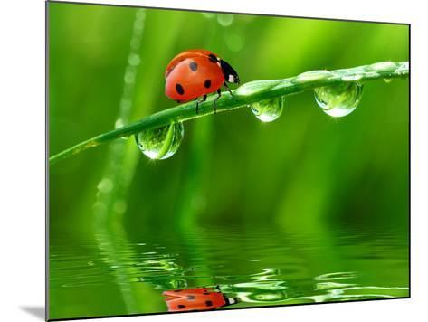 Fresh Morning Dew And Ladybird-volrab vaclav-Mounted Photographic Print