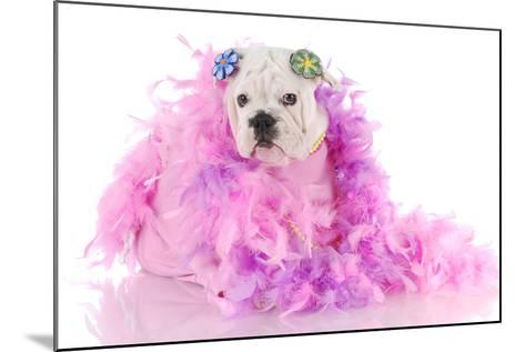 Spoiled Puppy-Willee Cole-Mounted Photographic Print
