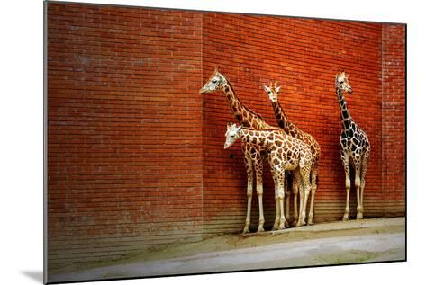 Giraffes-yuran-78-Mounted Photographic Print