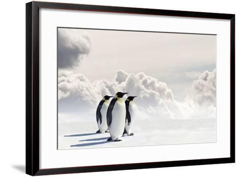 Emperor Penguins In Antarctica-Jan Martin Will-Framed Art Print