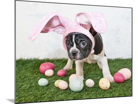 Easter Bunny Puppy- JStaley401-Mounted Photographic Print
