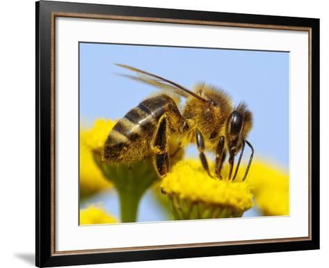 Detail Of Honeybee-Daniel Prudek-Framed Art Print
