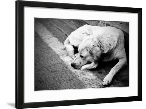 Homeless Stray Dog-Zoom-zoom-Framed Art Print