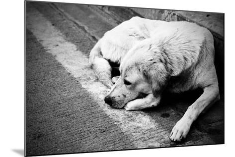 Homeless Stray Dog-Zoom-zoom-Mounted Photographic Print