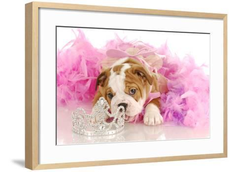 Spoiled Dog - English Bulldog Puppy Chewing On Tiara Surrounded By Pink Feathers-Willee Cole-Framed Art Print