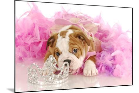 Spoiled Dog - English Bulldog Puppy Chewing On Tiara Surrounded By Pink Feathers-Willee Cole-Mounted Photographic Print