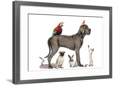 Group Of Pets - Dog, Cat, Bird, Reptile, Rabbit, Isolated On White-Life on White-Framed Art Print