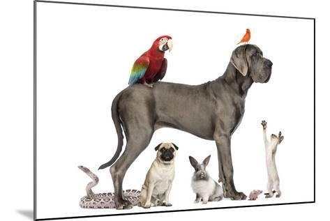 Group Of Pets - Dog, Cat, Bird, Reptile, Rabbit, Isolated On White-Life on White-Mounted Photographic Print