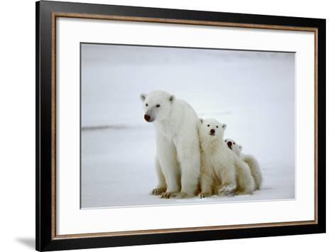 Polar She-Bear With Cubs-SURZ-Framed Art Print
