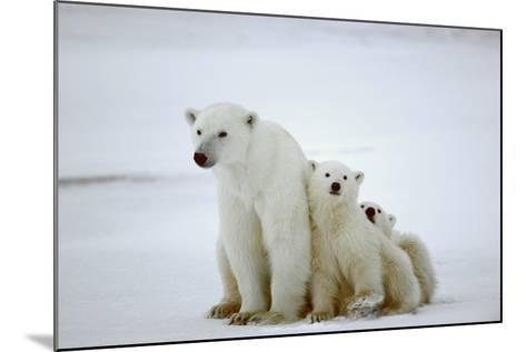Polar She-Bear With Cubs-SURZ-Mounted Photographic Print