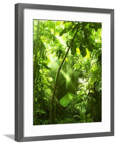 Tropical Forest, Trees In Sunlight And Rain-odmeyer-Framed Art Print