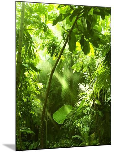 Tropical Forest, Trees In Sunlight And Rain-odmeyer-Mounted Photographic Print