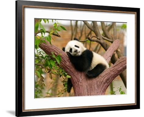 Sleeping Giant Panda Baby-silver-john-Framed Art Print