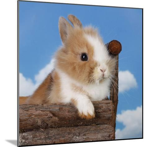 Rabbit Baby Bunny Outdoor-Richard Peterson-Mounted Photographic Print
