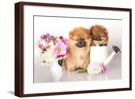 Two German (Pomeranian) Spitz Puppies And Flowers On White Background-Lilun-Framed Art Print