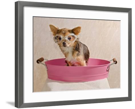 Chihuahua Puppy Taking A Bath Wearing Goggles Sitting In Pink Bathtub-vitalytitov-Framed Art Print