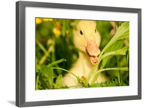Small Yellow Duckling Outdoor On Green Grass-goinyk-Framed Art Print