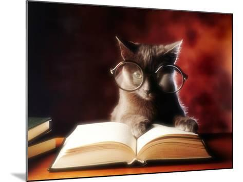 Gray Cat With Glasses Reading A Book-gila-Mounted Photographic Print