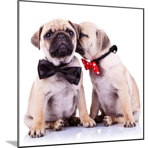Lady Mops Puppy Whispering Something Or Kissing Its Gentleman Partner While Seated-Viorel Sima-Mounted Photographic Print